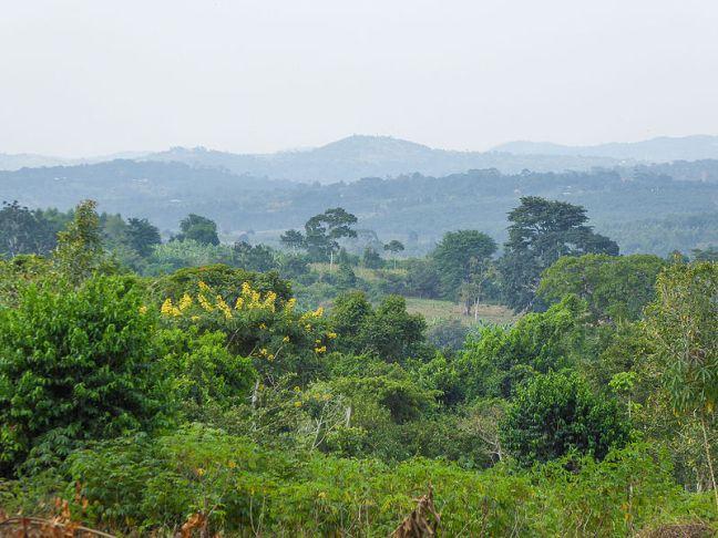 800px-Landscape_at_Mbazzi_01